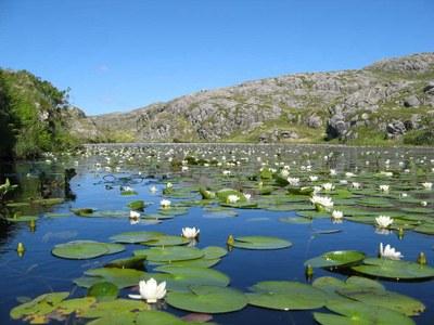 Winning water lilies
