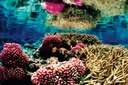 Conservation: Nature publishes priorities for conserving global biodiversity