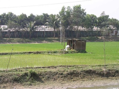 Groundwater-fed irrigation reduces arsenic pollution