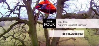 Nature's greatest survivor: The Iconic Oak