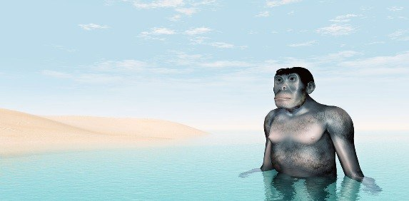 Sorry David, we didn't evolve from aquatic apes