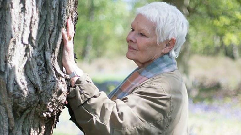 Scanning a 200 year-old oak