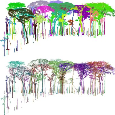 Understanding tropical tree architecture