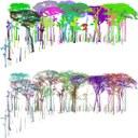 Understanding tropical tree architecture