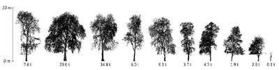 Weighing trees with lasers