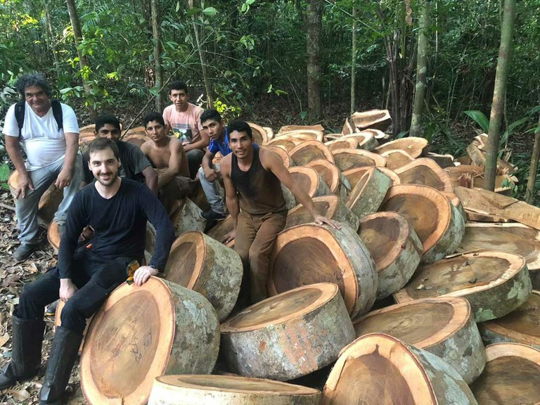 Revising forest biomass estimates within super-sized Amazon trees