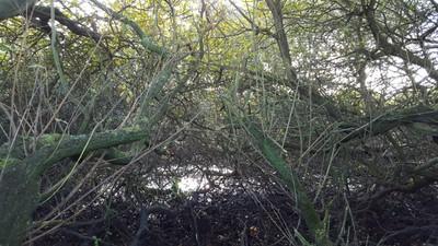 Inside overgrown Norfolk Pond - Oct 2016