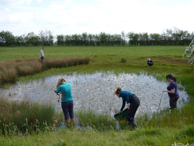 Investigating a new pond