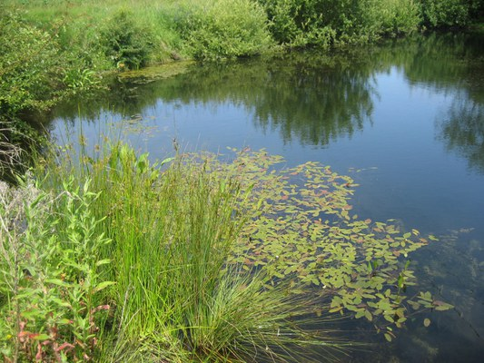 Restored farmland pond