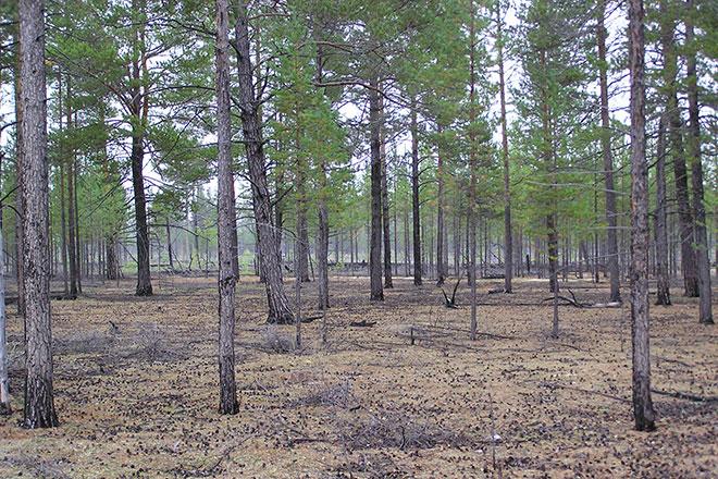 Forest-Observation-System.jpg