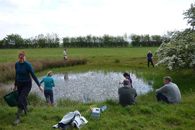 Norfolk-Ponds.jpg